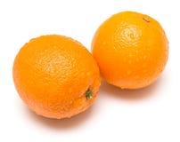 Våta apelsiner Arkivfoton