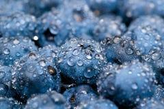 Våta blåbär stänger sig upp Arkivbilder