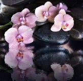 Våta brunnsortkiselstenar och rosa orkidér Arkivbilder