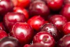 våta Cherry Royaltyfri Fotografi