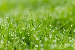 Våta grässtrån Arkivfoto