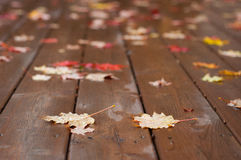 Våta höstsidor på trädäck Fotografering för Bildbyråer