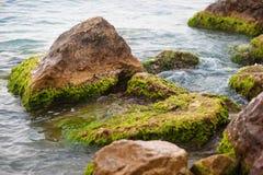 Våta havsstenar som täckas med grön havsväxt Royaltyfria Foton