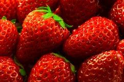 våta jordgubbar Royaltyfria Foton