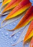 våta leaves royaltyfria foton