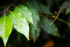 våta leaves Royaltyfri Foto