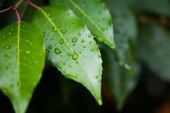 våta leaves Arkivbild