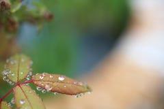 våta leaves Fotografering för Bildbyråer