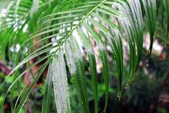 våta leaves royaltyfri fotografi