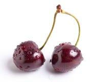 Våta mogna dubbla Cherry Stem arkivbild