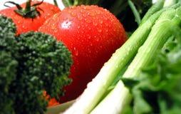 våta nya grönsaker royaltyfri fotografi