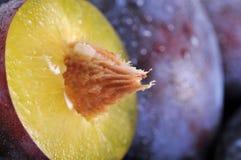 Våta plommoner Fotografering för Bildbyråer