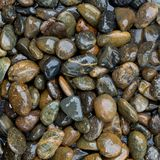 våta rocks Royaltyfri Foto
