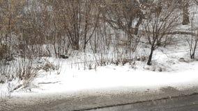 Våta snö- och regnnedgångar på träd och buskar längs en lerig och våt väg på regnig en vinter- eller höstdag arkivfilmer
