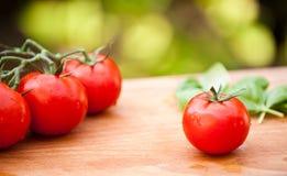 våta tomater Fotografering för Bildbyråer