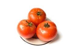 våta tomater arkivbilder