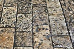 Våta trottoarstenar Royaltyfri Fotografi