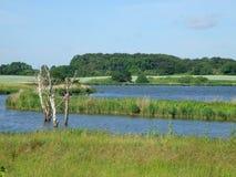 våtmark Arkivbild