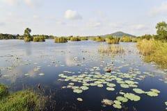 våtmark Royaltyfria Bilder