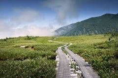 Våtmark i Japan Arkivbilder
