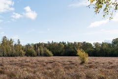 Våtmark i nedgångfärger Arkivbild