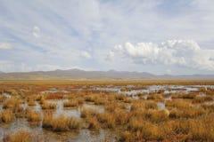 Våtmark i Ruoergai automn Royaltyfri Fotografi