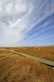 Våtmark i Ruoergai automn Arkivfoton