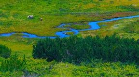 Våtmark med en flod Arkivbilder