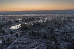 Våtmark med litet sörjer träd som täckas i kylig vintermorgonfrost royaltyfri foto