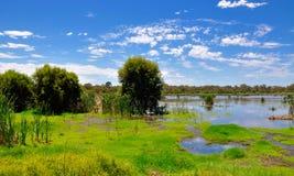 Våtmarkbeskydd i Bibra sjön, västra Australien arkivbilder