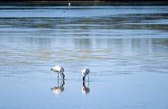 våtmarkdjurliv royaltyfria foton