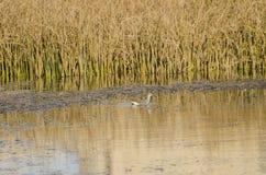 Våtmarkekosystem royaltyfri foto