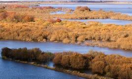 Våtmarken Royaltyfria Bilder