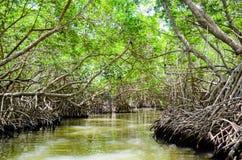 Våtmarken Ria Celestun Biosphere Reserve, Mexico Fotografering för Bildbyråer
