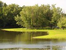 våtmarker Royaltyfri Bild