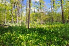 våtmarker Arkivbilder