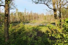 våtmarker Royaltyfri Foto