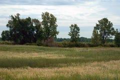 våtmarker arkivbild