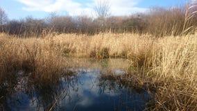 våtmarker fotografering för bildbyråer