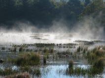 Våtmarker 2 Arkivbilder