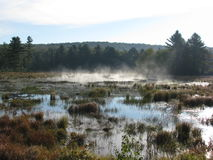 Våtmarker 3 Royaltyfria Foton