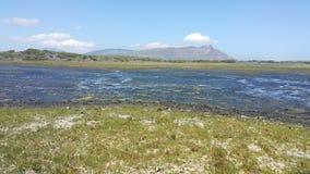 våtmarker Royaltyfria Bilder
