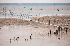 våtmarker royaltyfria foton