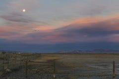 Våtmarker av Greatet Salt Lake Arkivfoton