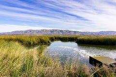 Våtmarker i Alviso träsk, södra San Francisco Bay, San Jose, Kalifornien royaltyfria bilder