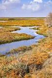 Våtmarker i Alviso träsk, södra San Francisco Bay, San Jose, Kalifornien royaltyfri fotografi