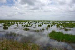 Våtmarker i Gannan Arkivfoto