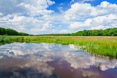 Våtmarker i landskapet av Drenthe, Nederländerna arkivbilder