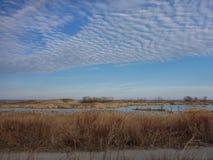 Våtmarker i nedgången Royaltyfri Bild