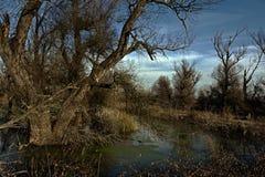 Våtmarker i solnedgången Fotografering för Bildbyråer